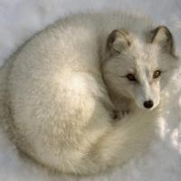 Merc Fox's picture