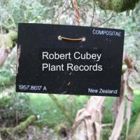 Robert Cubey's picture
